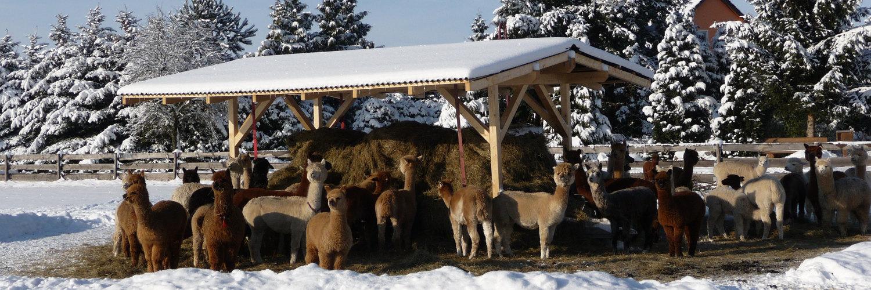 Alpaca Association e.V